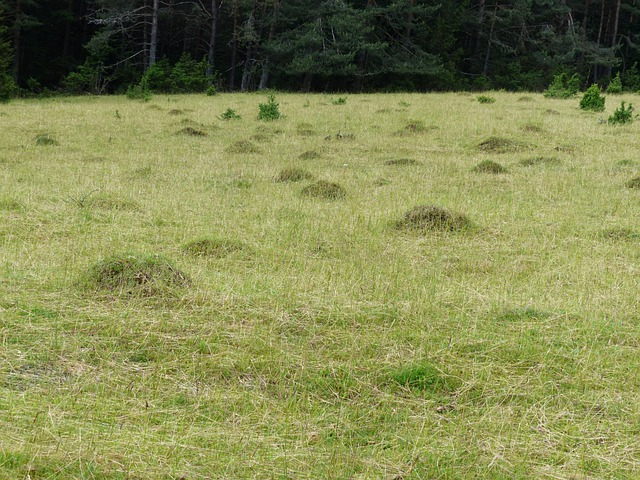 Meadow, Glade, Ant Hill, Meadow Ants, Ants, Green, Rush