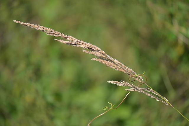 Blade Of Grass, Nature, Close, Meadow