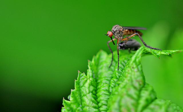 Insect, Mosquito, Close Up, Nature, Meadow