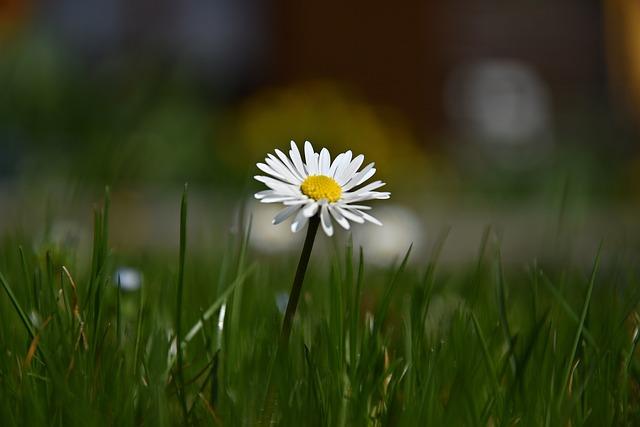 Grass, Nature, Meadow, Field, Summer