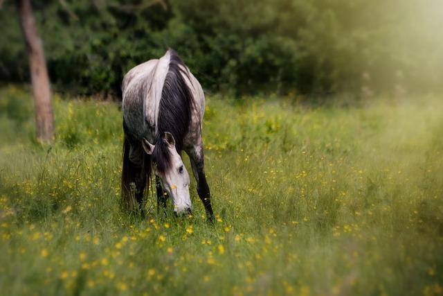 Horse, Pasture, Animal, Meadow, Eat, Coupling, Mammal