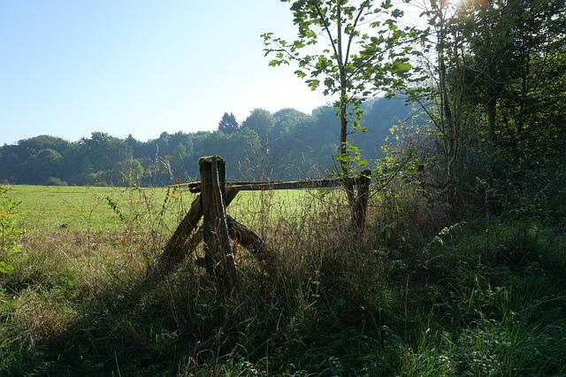 Fence, Meadow, Forest, Pasture, Wood Fence, Wood