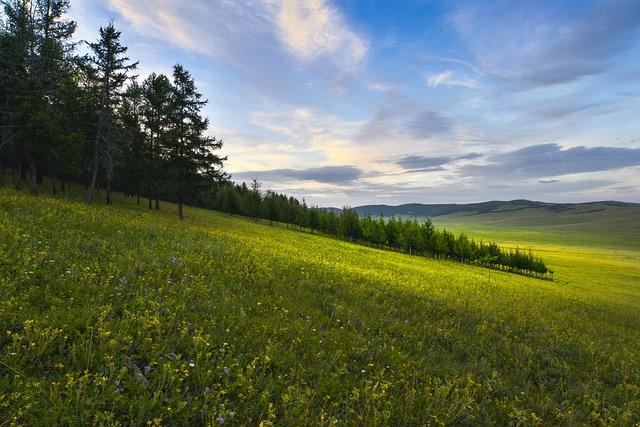 Meadow, Flowers, Spread, Body Ghat Province, Mongolia