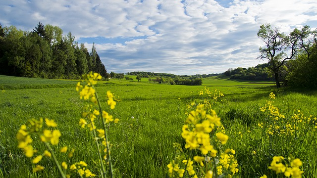 Meadow, Flowers, Spring Meadow, Landscape, Reported