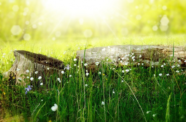 Flowers, Meadow, Wood, Forest, Sun, Summer, Vacation