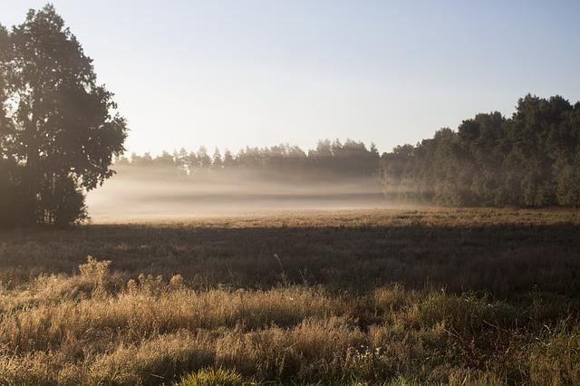 The Fog, Vaguely, Meadow, Morning, Autumn, The Silence