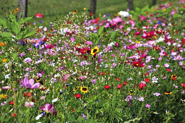 Wild Flowers, Meadow, Plant, Floral, Colored, Summer