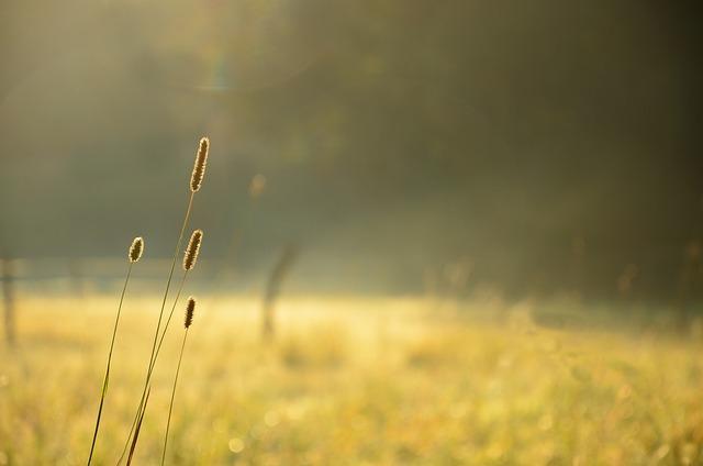 Plant, Nature, Bokeh, Meadow, Green, Morning, Yellow