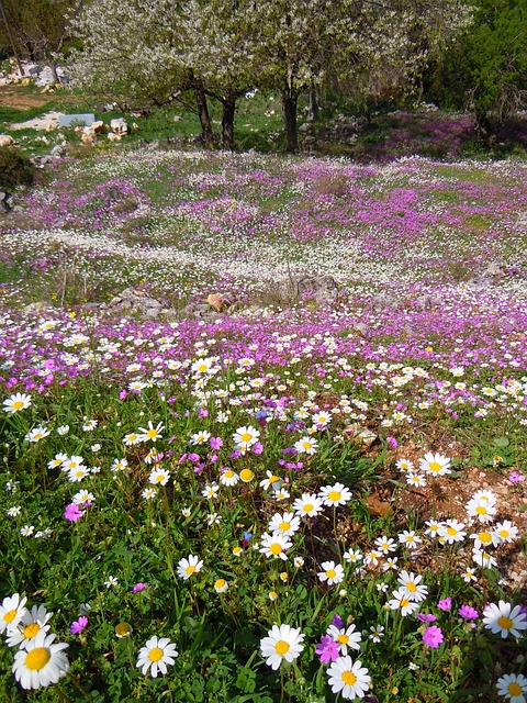 Flowers, Corfu, Spring, Perithia, Mediterranean, Greece