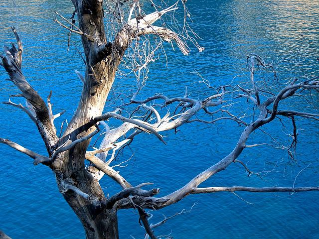 Tree, Dry, Frame, Mediterranean, Water, Mallorca