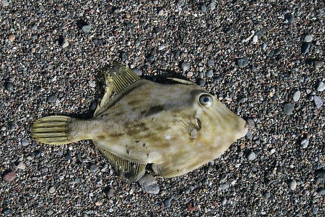 Fish, Beach, Sea, Holiday, Sand, Meeresbewohner, Coast