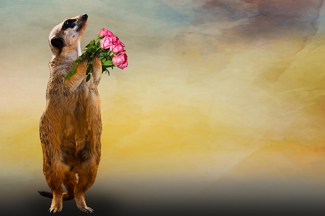 Animal, Meerkat, Bouquet, Thank You, Greeting Card