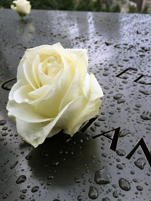 Memorial, Nyc, Manhattan, World Trade Center, 911