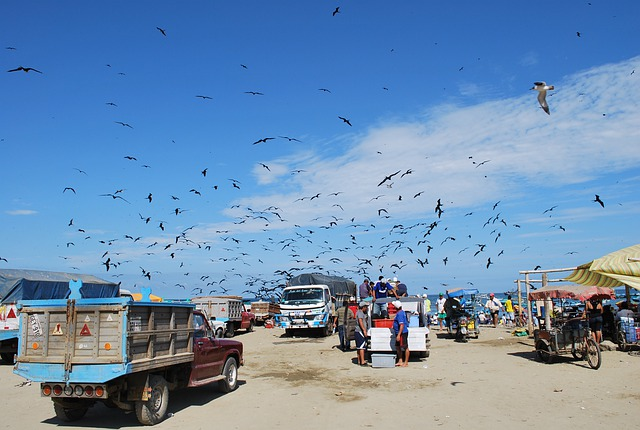Puerto Lopez, Ecuador, Sky, Clouds, Bird, Men, Trucks