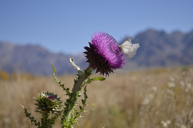 Mendoza, Flor, Uspallata, Mountain, Flowers, Nature