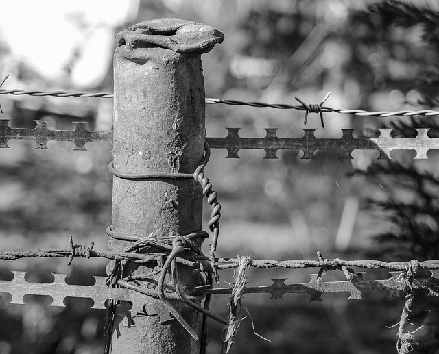 Steel, Iron, Fence, Barbed Wire, Metal, Close, Defense
