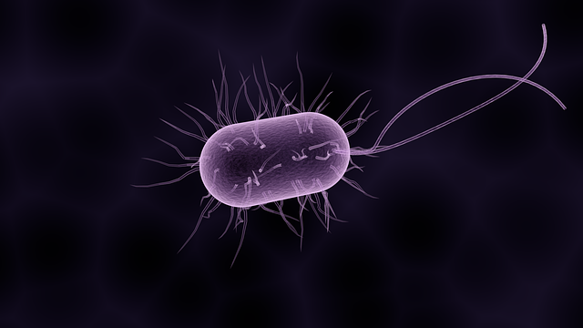 Bacteria, Bacterium, Microbiology, Biology, Health