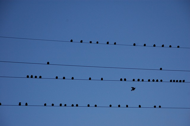 Wire, Birds, Migration, Partition