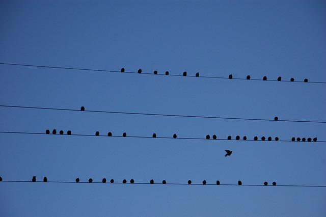 Wire, Birds, Migration, Partition