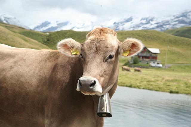 Cow, Agriculture, Rural, Farm, Milk, Switzerland