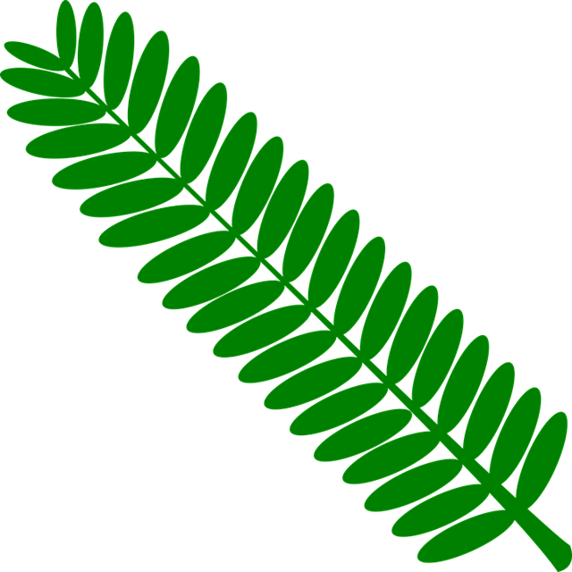 Green, Home, Leaf, Leaves, Mimosa, Monochrome, Nature