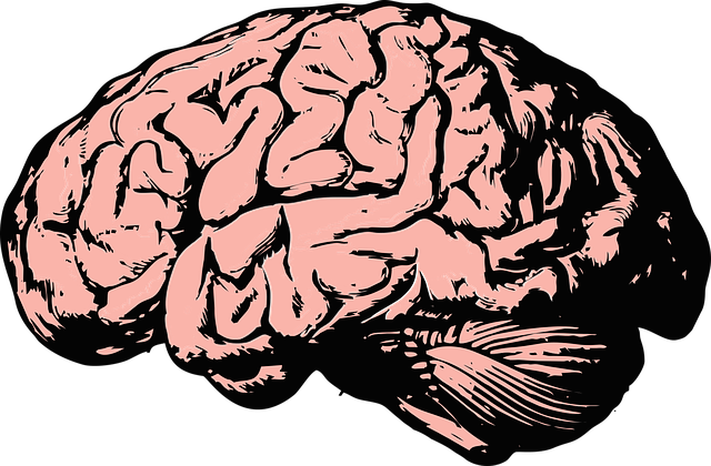 Brain, Think, Knowledge, Mind, Science, Anatomy, Health
