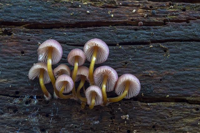 Mushroom, Small Mushroom, Sponge, Mini Mushroom