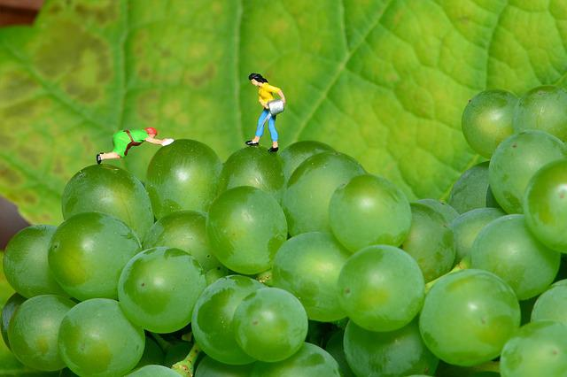 Grapes, Small World, Green Grapes, Mini People