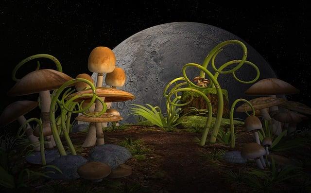 Plants, Mushrooms, Garden, Mythical World, Miraculously