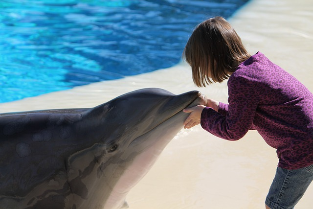 Girl, Dolphin, Young, Las Vegas, Mirage Casino