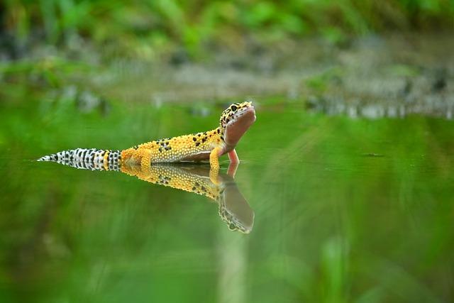 Mirror, Shadow, Gecko