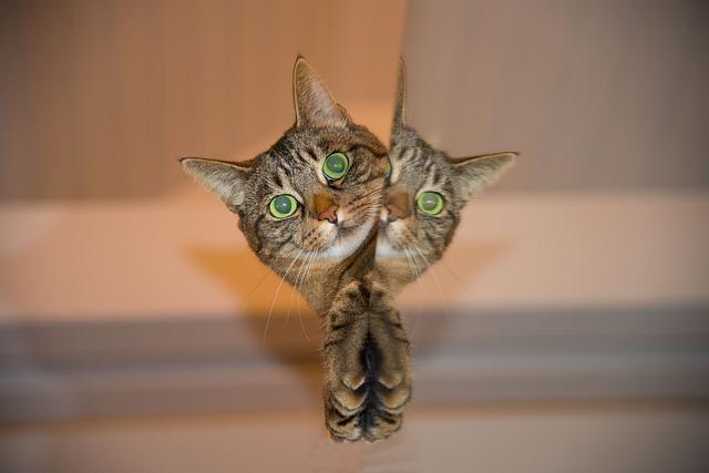 Cat, Pet, Mirror