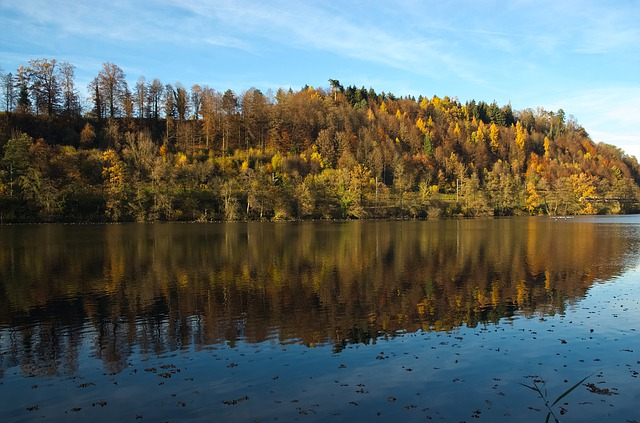 Autumn, Autumn Forest, Mirroring, Reflection, Nature
