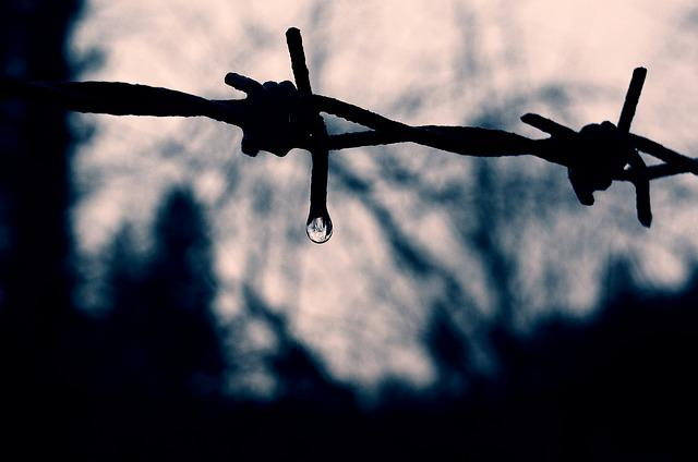 Barbed Wire, Drip, Mirroring, Drop Of Water, Raindrop