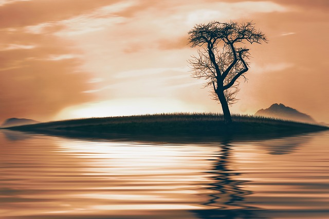 Tree, Nature, Lake, Water, Sky, Sunset, Mirroring