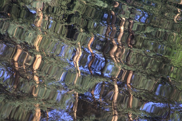 Water, Reflections, Mirroring, Trees, Wave, Surface