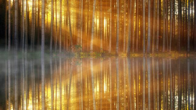 Pattern, Background, Forest, Texture, Shiny, Mirroring