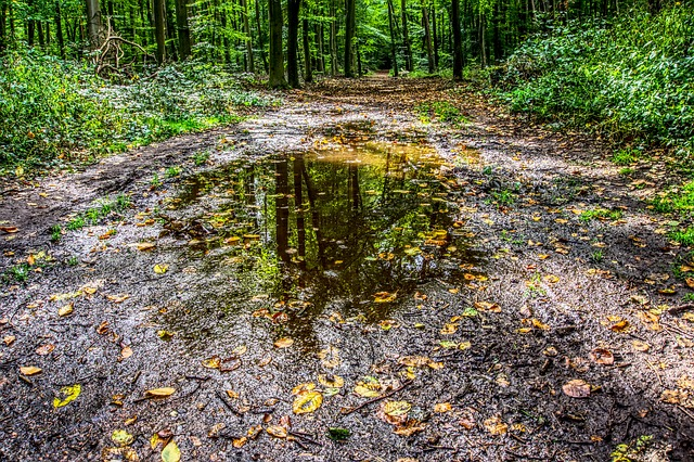 Puddle, Water, Water Puddle, Mirroring, Reflect, Leaves