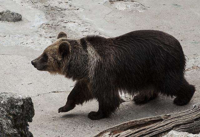 Zoo, Animals, Nature, Fauna, Misiek, The Bear, Bear