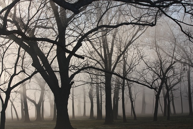 Woods, Texas, Mist, Trees, Landscape, Autumn, Fall