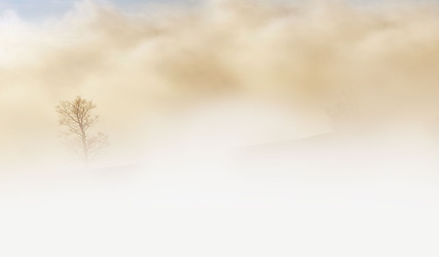 Fog, Tree, Haze, Beige, Cloudy, Misty