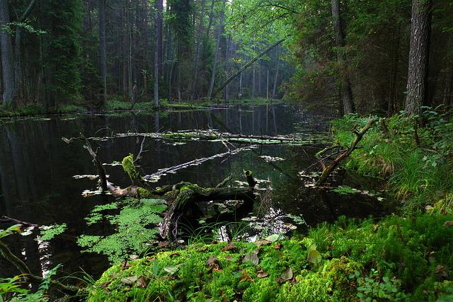 Poland, Mite, Black Pond, The Tract, Nature, Mood