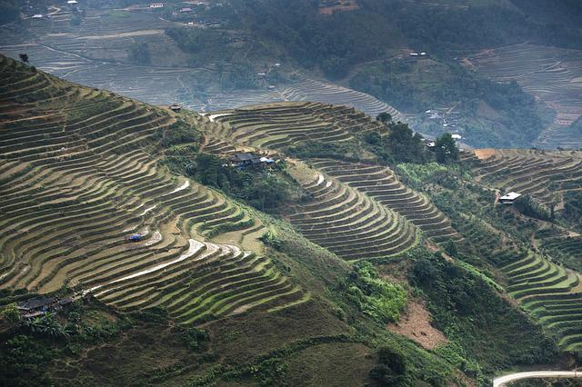 Terraces, Scenery, Son La, Moc Chau, Magical, Field