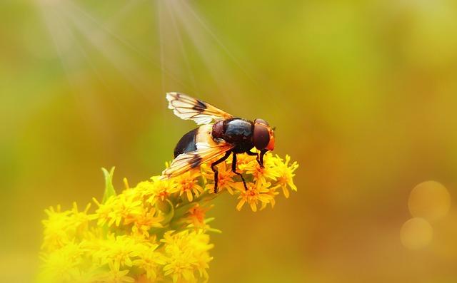 Trzmielówka Forest, Muchówka, Flower, Model, Insect