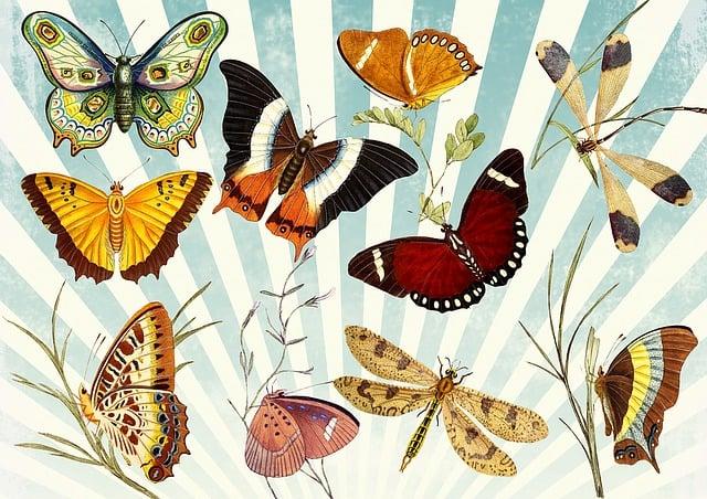Butterfly, Vintage, Collage, Sky, Modern, Butterflies