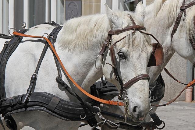 Horse, Monteaura, Mold, Bridle