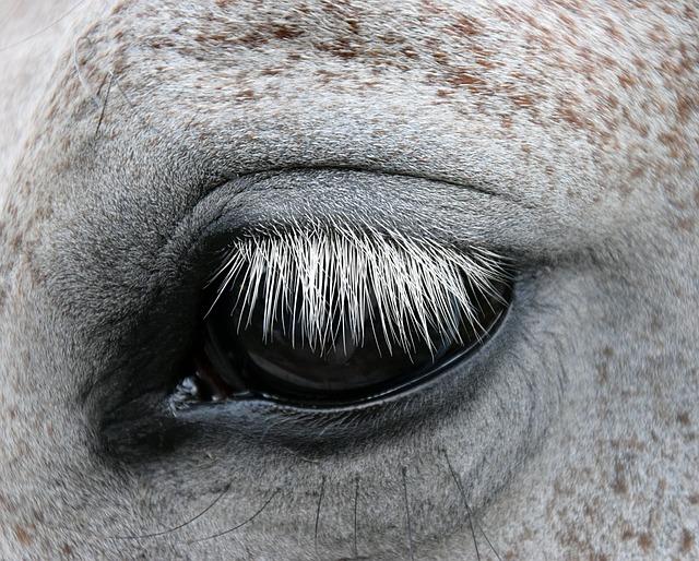 Mold, Horse, Eye, Gentle, Horse Head