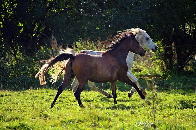 Horse, Mold, Flock, Gallop, Pasture, Meadow, Brown Mold