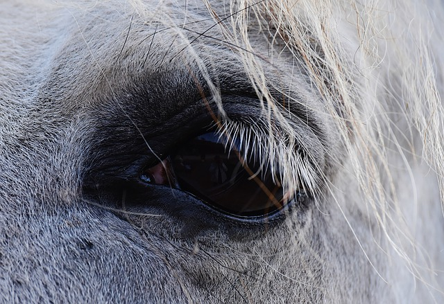 Horse, Mold, Eye, View, Reiterhof, Animal, White Horse