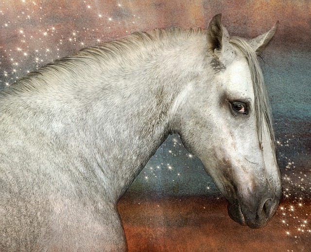 Horse, Andalusians, Pre, Mold, White, Pferdeportrait